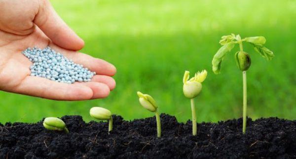 Bón phân đúng loại phân giúp cây trồng phát triển tốt nhất