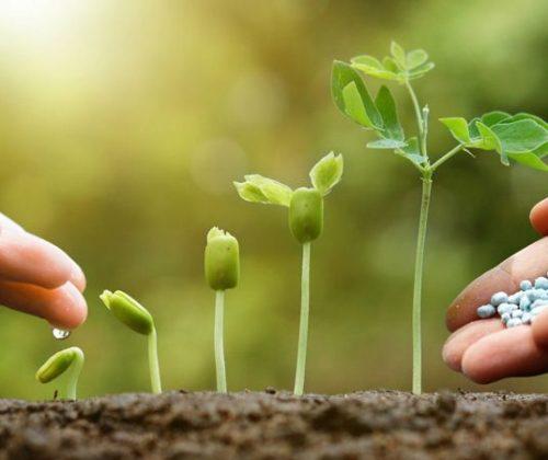 Bón phân giúp thúc đẩy quá trình sinh trưởng của cây