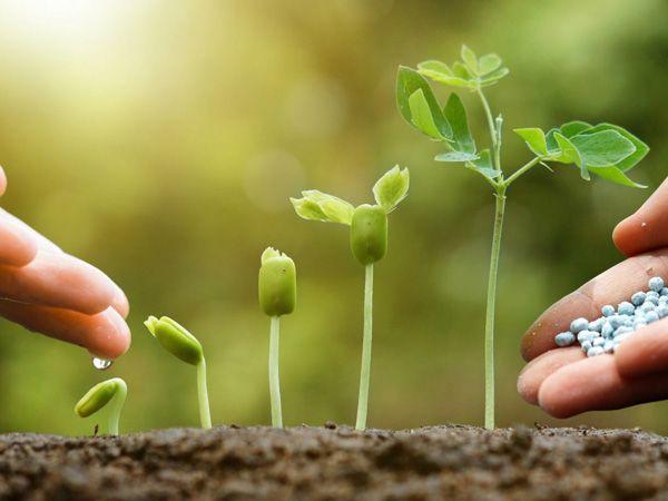 Phân bón là gì? Tác dụng của phân bón đối với cây trồng