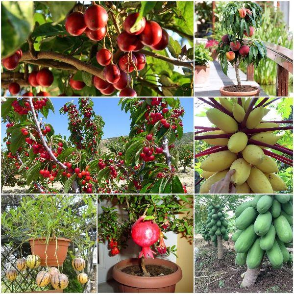 Năng suất cây trồng cao nhờ sử dụng phân bón