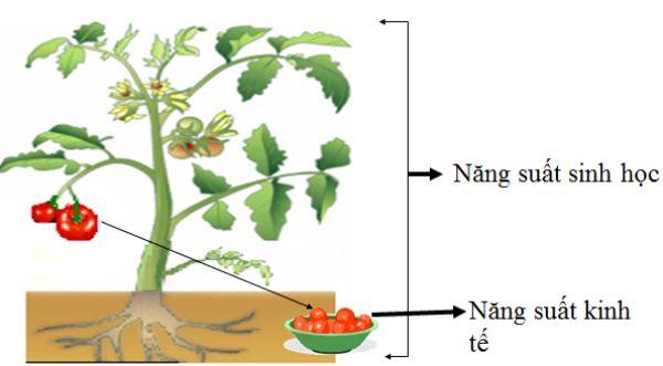Phân bón làm tăng chất lượng cây trồng