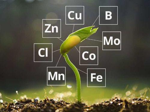 Phân vi lượng rất quan trọng đối với cây trồng