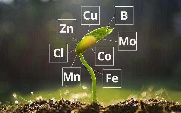 Phân vi lượng là gì? Tác dụng của những loại phân vi lượng đối với cây trồng