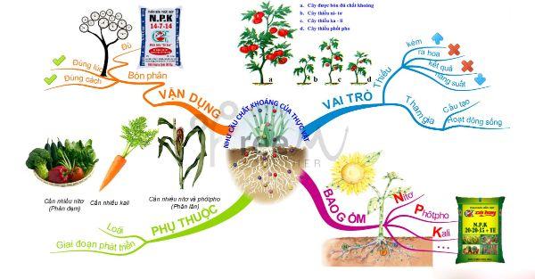 Thế nào là bón phân hợp lý cho cây trồng?