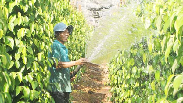 Phân bón lá và những ưu điểm tuyệt vời đối với cây trồng