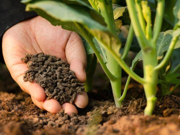 Phân bón hữu cơ sinh học có đầy đủ dinh dưỡng cần thiết cho cây trồng