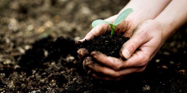 Sử dụng phân bón hữu cơ sinh học không gây ô nhiễm môi trường