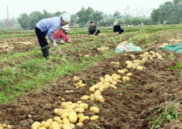 Tăng chất lượng nông sản